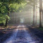 Ätherisches Öl Wald Wirkung